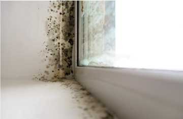 Orlando-Mold-Public-Adjuster
